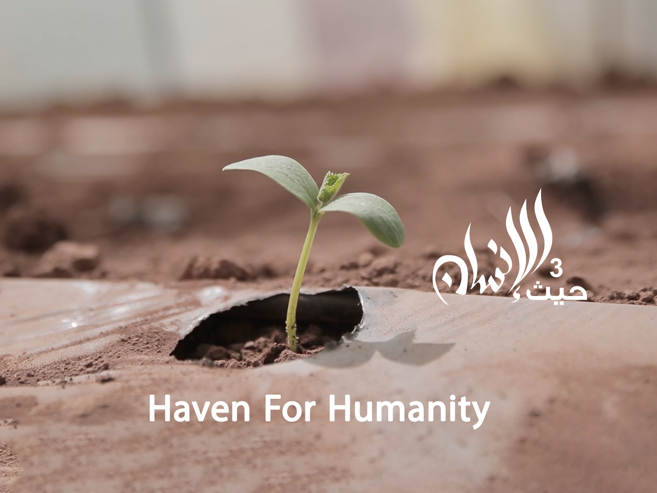 Haven for Humanity 2021